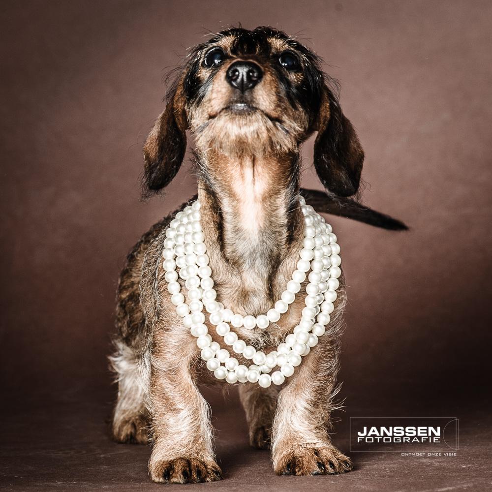 kleine diva hondenfotografie