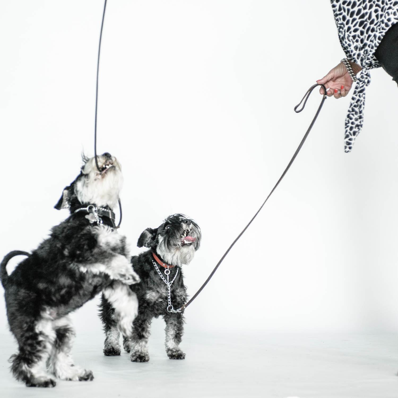 Twee honden op de foto