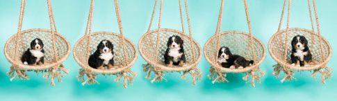 Puppies op de foto