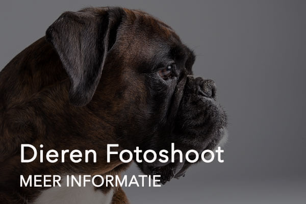 dieren fotoshoot button